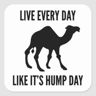 Live Every Day Like It's Hump Day Square Sticker