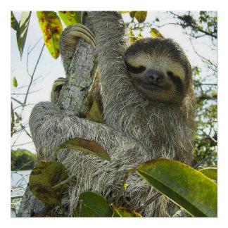 Live Life Like a Sloth Poster