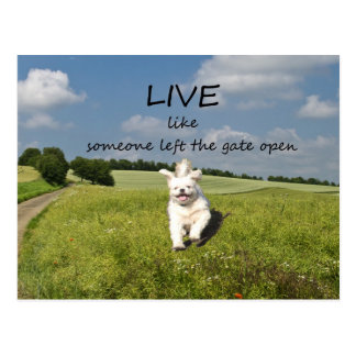 """Live Like Someone Left the Gate Open"" Postcard"