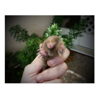 Live mole in hand smiling.jpg postcard