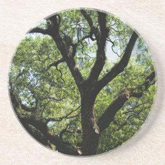 Live Oak In Downtown Savannah Drink Coasters