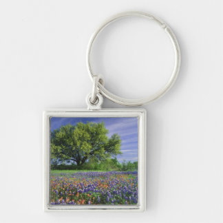 Live Oak & Texas Paintbrush, and Texas Silver-Colored Square Key Ring