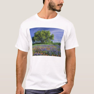 Live Oak & Texas Paintbrush, and Texas T-Shirt