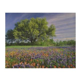 Live Oak & Texas Paintbrush, and Texas Wood Wall Art