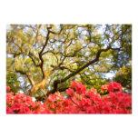 Live Oak Tree and Azaleas Personalised Invites