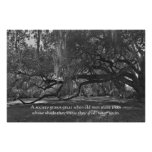 Live Oak Trees Proverb Poster Print