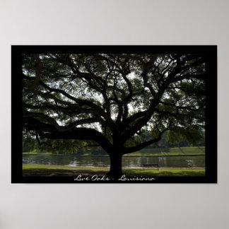 Live Oaks - Louisiana Poster