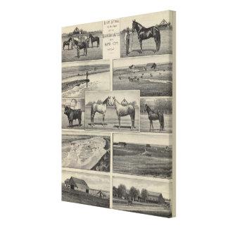 Live Stock in Kansas Canvas Print