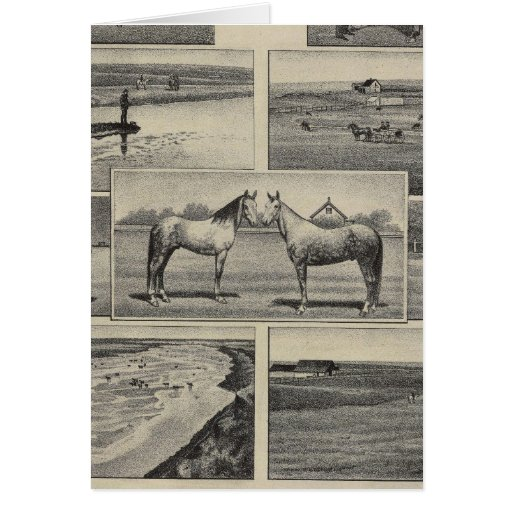 Live Stock in Kansas Greeting Cards