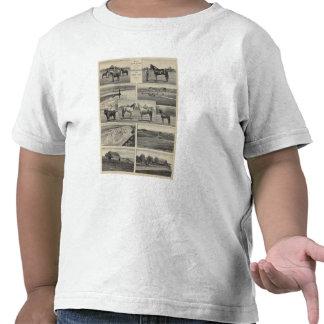 Live Stock in Kansas Tshirt