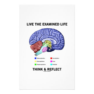 Live The Examined Life Think & Reflect (Brain) Stationery Paper