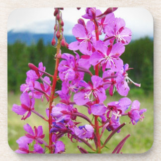 Lively Fireweed Beverage Coasters