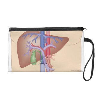 Liver Transplant Procedure Wristlet Purses