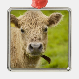 Livestock in a pasture christmas ornament