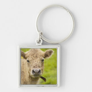 Livestock in a pasture Silver-Colored square key ring