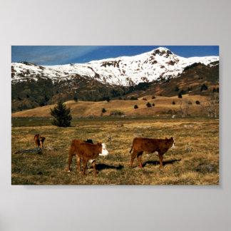 Livestock on Kodiak Poster