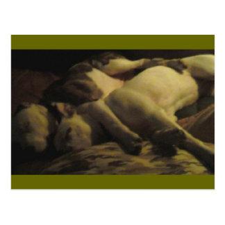 livin in a pitbull paradise postcard