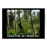 Living Free Orangutans in Borneo Jungle Cards