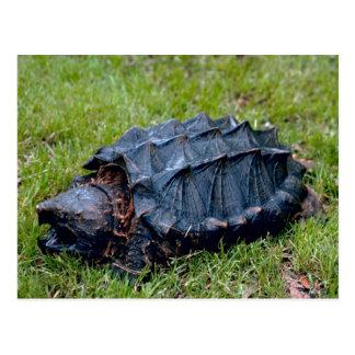 Living Prehistoric Turtle Postcard