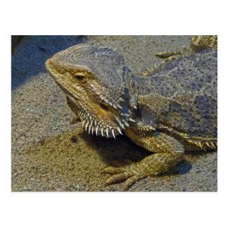 Living Under Fire - Bearded Dragon Postcard