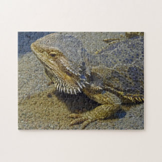 Living Under Fire - Bearded Dragon Puzzle