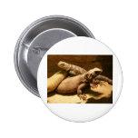lizard 2 pinback buttons