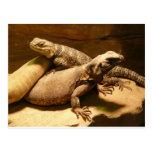 lizard 2 postcard