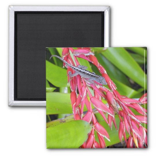 Lizard and Beauty Square Magnet