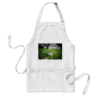 lizard at attention on rock reptile animal standard apron