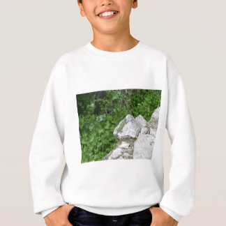 Lizard Basking In The Sun Sweatshirt