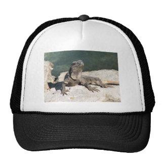 Lizard Cap