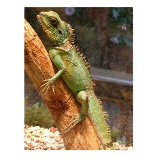 Lizard Climbing a Tree Postcard