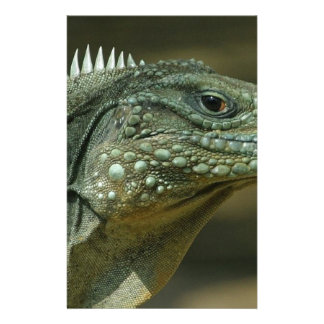 Lizard Face Stationery