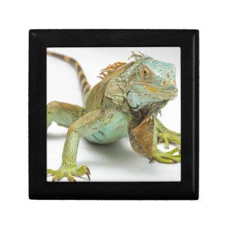 Lizard Gift Box