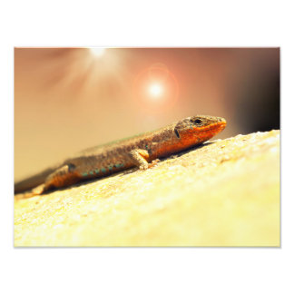 Lizard heat photo