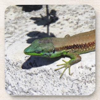 Lizard in the sun drink coasters