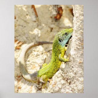Lizard photo print