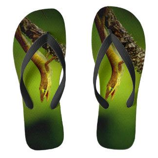 Lizard Photograph On Flip flops