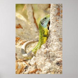 Lizard Posters