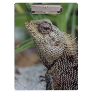 Lizard Reptile Nature Photography Clipboard