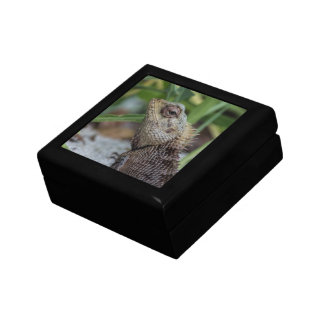 Lizard Reptile Nature Photography Gift Box