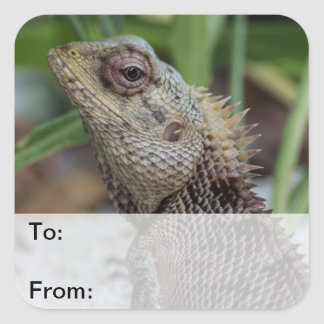 Lizard Reptile Nature Photography Square Sticker