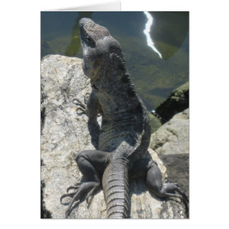 Lizard Rock Greeting Card