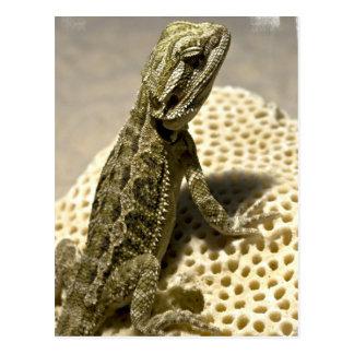 Lizard Species Postcard