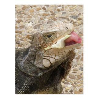 Lizard Tongue Postcard