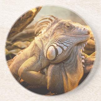 Lizard Up Close Drink Coaster