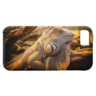 Lizard Up Close iPhone 5 Cases