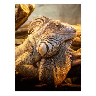 Lizard Up Close Postcard
