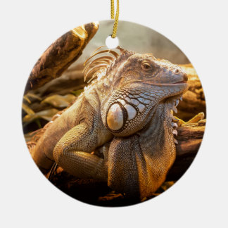 Lizard Up Close Round Ceramic Decoration