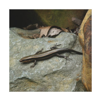 Lizard, Wrapped Canvas Print.